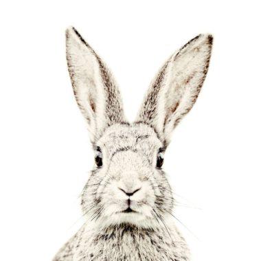 magneetbehang konijn