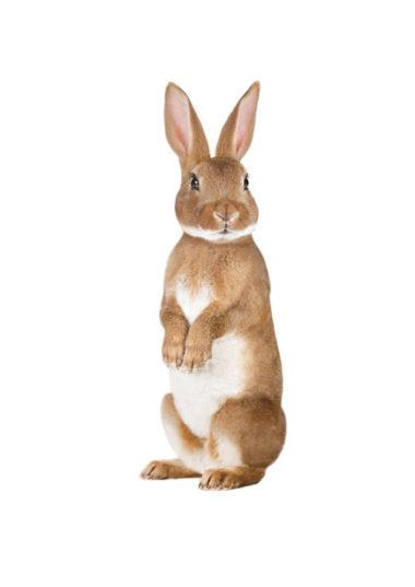muursticker konijn, vos, egel, mus