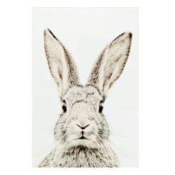 magneetposter konijn zonder frame