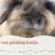 tips voor een gelukkig konijn