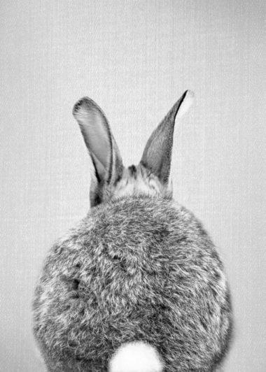 black & white bunnybutt